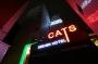 Hotel Hotel Cats